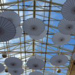 Canopy_DSC03544